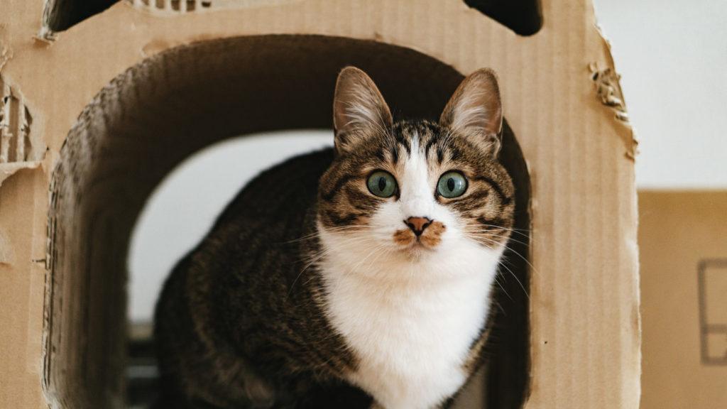 Twitterを使っていて、固定ツイートが外れてしまいびっくりしている猫のイメージ画像
